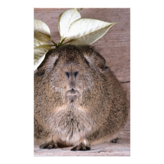 Cute Grey Guinea Pig Wearing a Leaf Hat Stationery