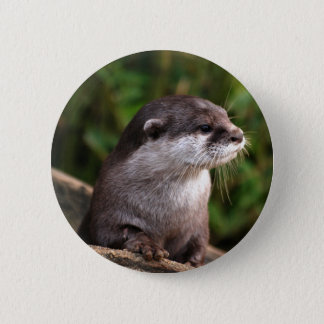 Cute grey otter pinback button