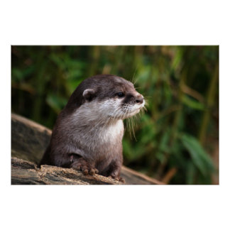 Cute grey otter poster