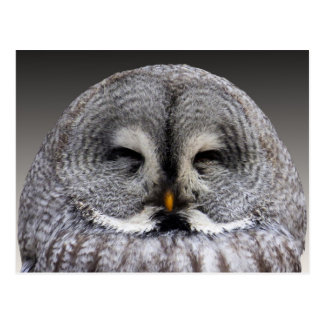Cute grey owl portrait postcard