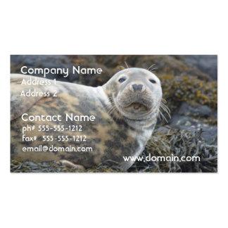 Cute Grey Seal Business Card Template