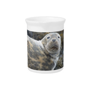 Cute Grey Seal Pitchers