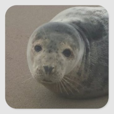 Beach Themed Cute grey seal pup baby on sandy beach