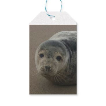 Beach Themed Cute grey seal pup baby on sandy beach gift tags
