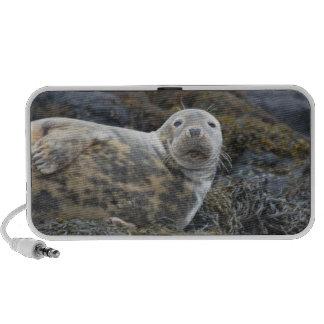 Cute Grey Seal Mini Speakers