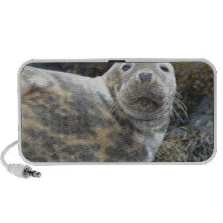 Cute Grey Seal Mini Speaker