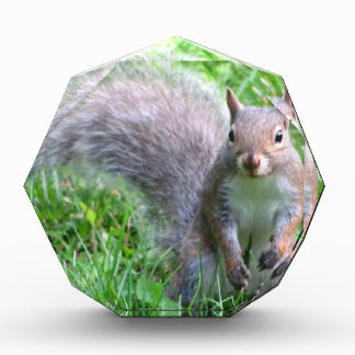 Cute Grey Squirrel Award