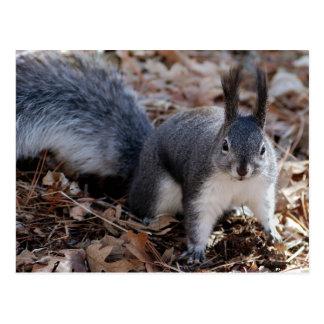 Cute grey squirrel in autumn postcard