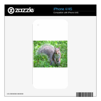 Cute Grey Squirrel iPhone 4S Decal