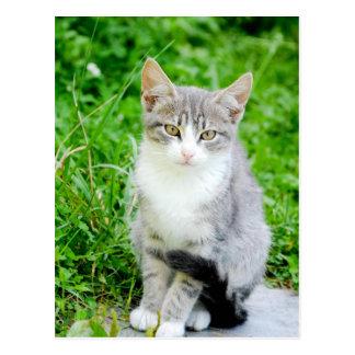 Cute Grey Tabby Kitten Postcard