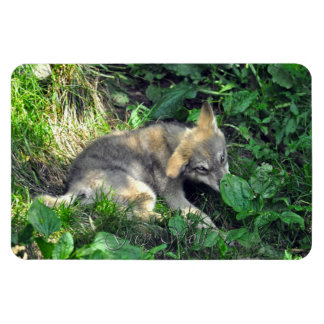 Cute Grey Wolf Pup Wildlife Photo Premium Magnet