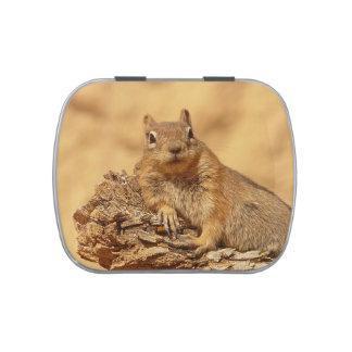 Cute Ground Squirrel Candy Tin