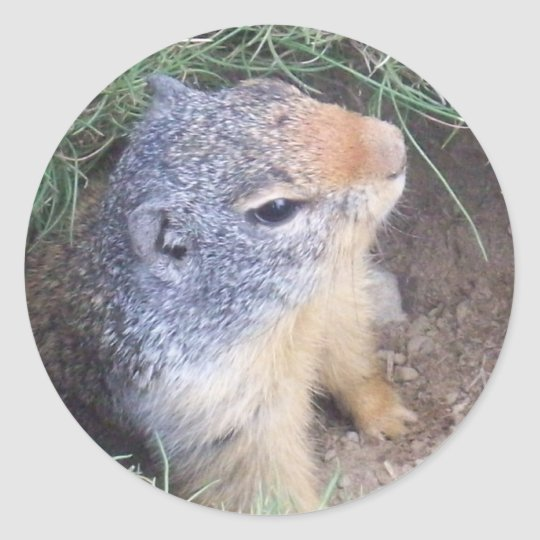 Cute Groundhog Sticker
