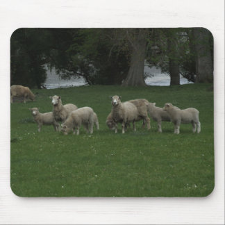 Cute Group Of Sheep Eating Grass Mouse Pads