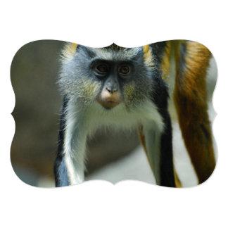 Cute Guenon Wolf's Monkey 5x7 Paper Invitation Card