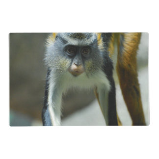 Cute Guenon Wolf's Monkey Laminated Placemat