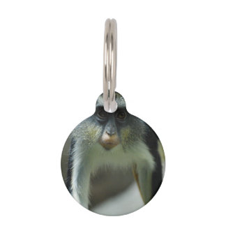 Cute Guenon Wolf's Monkey Pet Name Tag