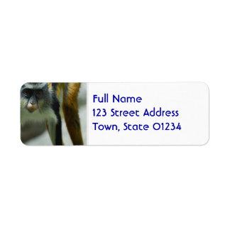 Cute Guenon Wolf's Monkey Return Address Label