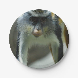 Cute Guenon Wolf's Monkey 7 Inch Paper Plate