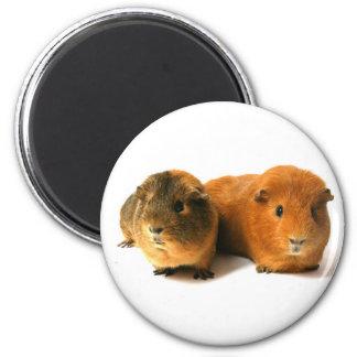 cute guinea pig 2 inch round magnet