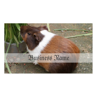 Cute Guinea Pig Double-Sided Standard Business Cards (Pack Of 100)