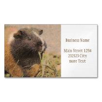 cute Guinea pig Business Card Magnet