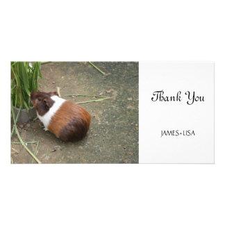 Cute Guinea Pig Card