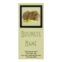 Cute Guinea Pig Close Up Photograph Rack Card