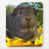Cute Guinea Pig in Nature Mouse Pad