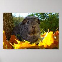 Cute Guinea Pig in Nature Poster