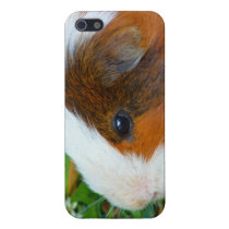Cute Guinea Pig iPhone SE/5/5s Case