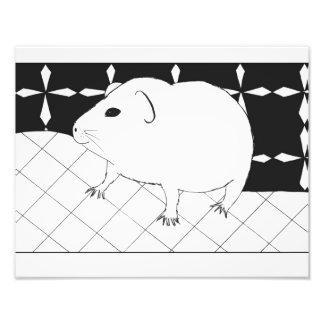 Cute guinea pig photo print
