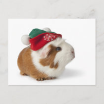 Cute Guinea Pig With Christmas Hat On White Holiday Postcard