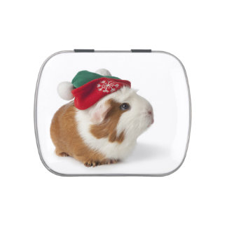 Cute Guinea Pig With Christmas Hat On White Jelly Belly Tin