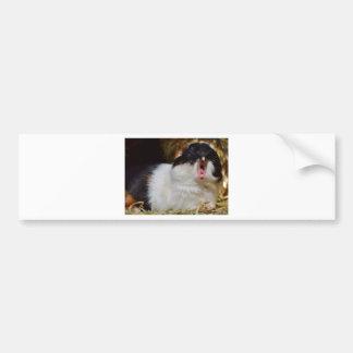 Cute Guineapig Yawning Bumper Sticker