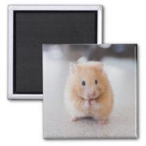 Cute hamster magnet