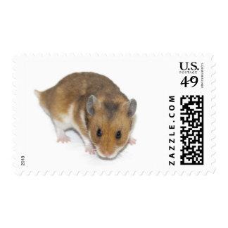 Cute hamster postage