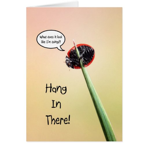 Cute Hang In There Ladybug Greeting Card