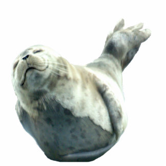 Cute Harbor Seal Wildlife Sculpted Gift Cutout