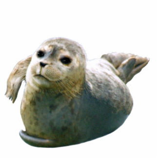 Cute Harbor Seal Wildlife Sculpted Gift Cut Out