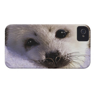 Cute Harp Seal Fantasy Art Wildlife Supporter iPhone 4 Cover