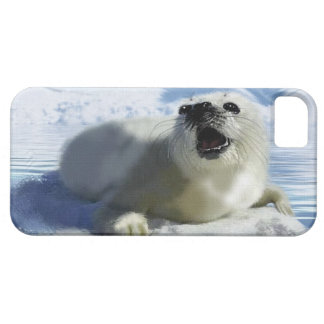 Cute Harp Seal & Ice Art for Wildlife Supporters iPhone SE/5/5s Case