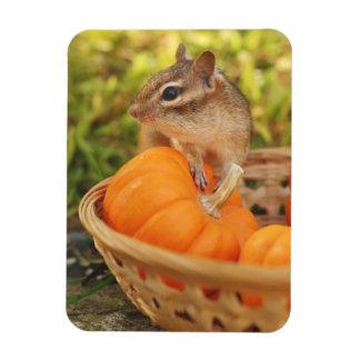 Cute Harvest Chipmunk Magnet
