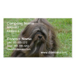 Cute Havanese Double-Sided Standard Business Cards (Pack Of 100)