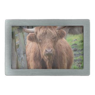 Cute Highland Cow by Fence Rectangular Belt Buckle