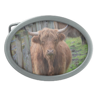 Cute Highland Cow by Fence Oval Belt Buckles