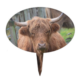 Cute Highland Cow by Fence Cake Pick