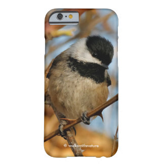 Cute Hopeful Hungry Black-Capped Chickadee Barely There iPhone 6 Case