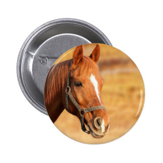 CUTE HORSE BUTTON