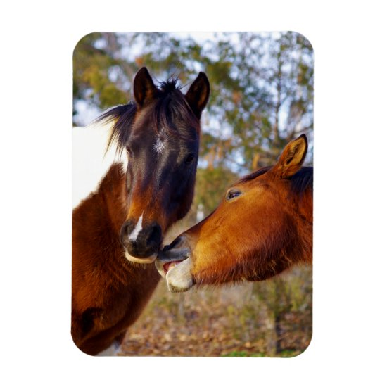 Cute Horse Magnets